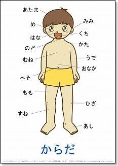 言葉の絵カード「体・顔・手 ... : 体の絵 : すべての講義
