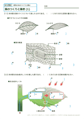 中学校 理科 pdf 無料