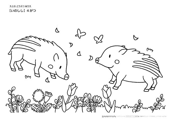 ぬりえ 干支 いのしし 猪 の季節ぬりえ 幼児教材 知育プリント ちびむすドリル 幼児の学習素材館