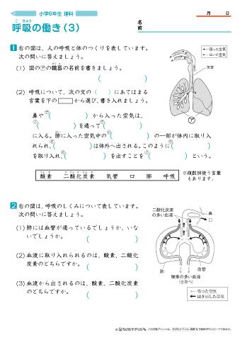 小学6年生理科 呼吸の働き 問題プリントちびむすドリル