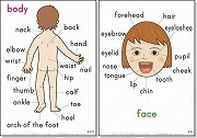 英語絵カード 「体・顔・手」